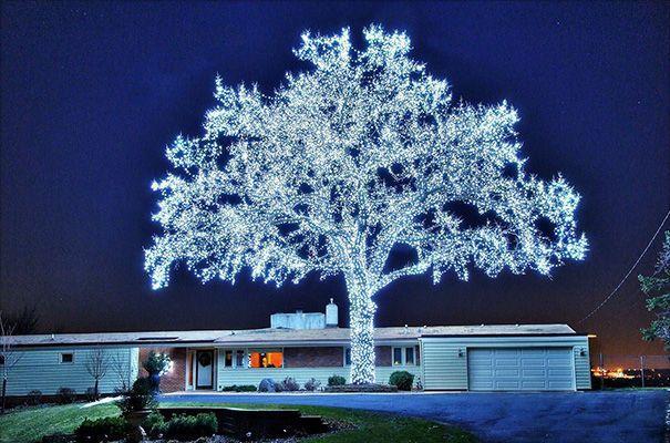 Phải huy động đến hơn 40.000 bóng đèn, người ta mới tạo ra được cái cây đẹp hoàn hảo đến thế này.