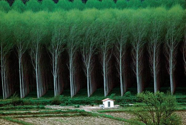 """Xe bức ảnh này, người ta không khỏi băn khoăn: những gốc cây kia mọc tự nhiên hay có người """"quy hoạch""""?"""