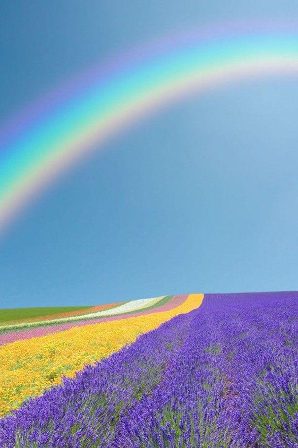 Hình ảnh cầu vồng ết hợp với cánh đồng hoa phía dưới thật tuyệt vời.