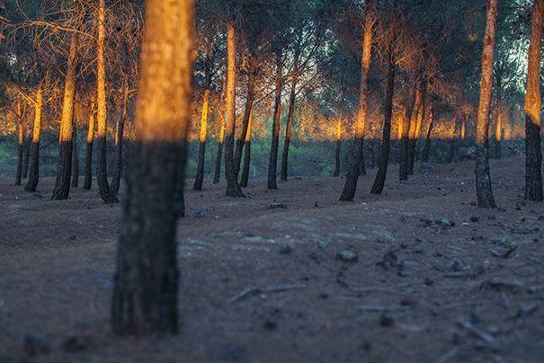 Ánh nắng nhìn như chia cả khu rừng ra thành hai phần riêng biệt.