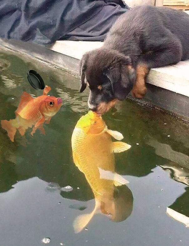 Ê ê tránh ra con chó kia, đây là bạn trai của chị mà.