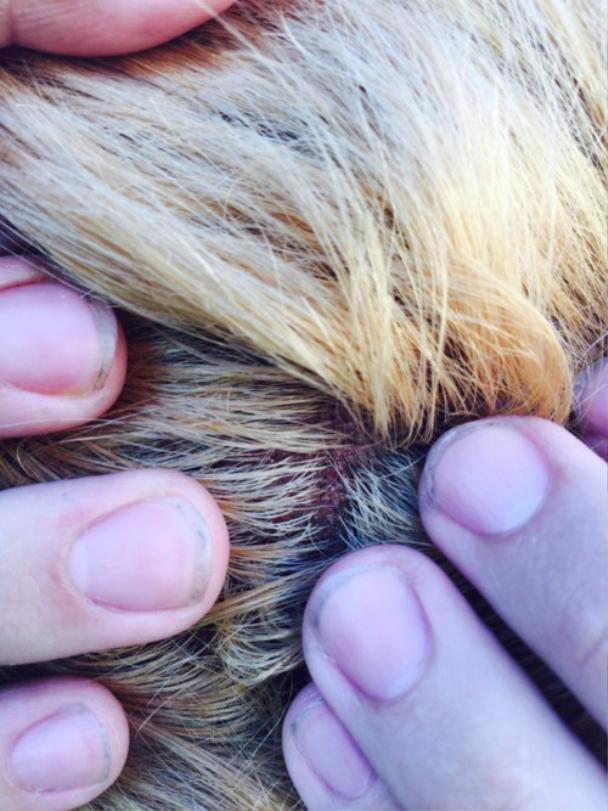 Tự tay dùng thuốc tẩy tóc tại nhà, cô gái hoảng hốt khi tóc rụng từng mảng trọc cả đầu ảnh 7