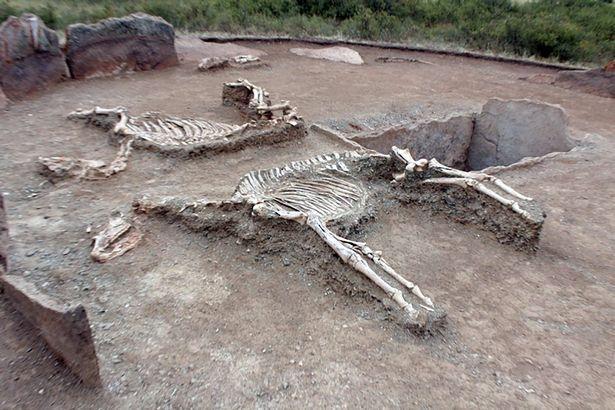Hai con ngựa được chôn theo cặp đôi như ngụ ý đưa họ về nơi thiên đường.