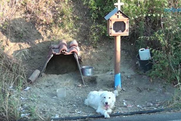 Con chó này đã ở lì tại nơi chủ qua đời suốt 18 tháng.