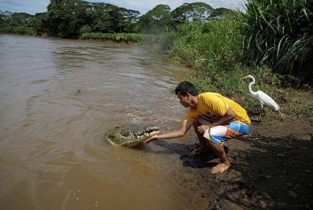 Anh Juan nói rằng loài động vật máu lạnh này không hung dữ như nhiều người vẫn nghĩ.