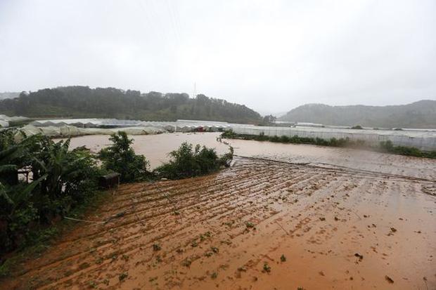 Nhiều ruộng vườn chìm trong nước lũ. Ảnh: Nhịp Sống Việt