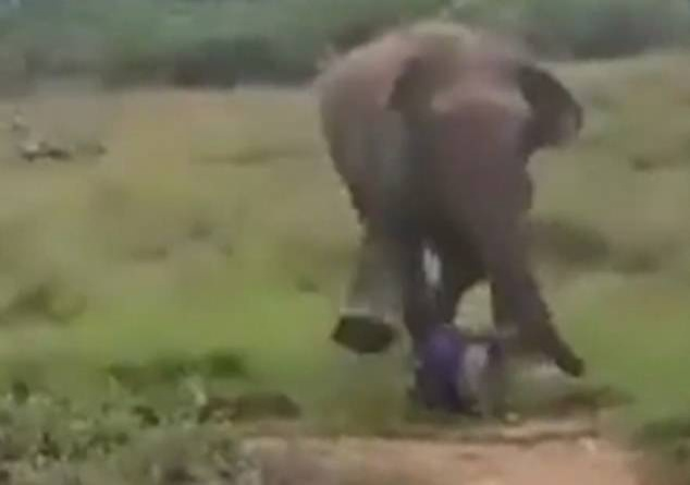 Cố gắng thôi miên voi nhưng không được, người đàn ông bị voi giẫm đạp đến chết.