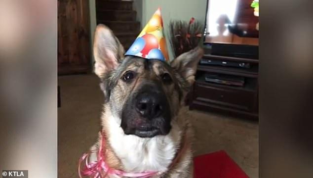 Một trong hai con chó của bà Trainer bị nghi là nguyên nhân gây bệnh.