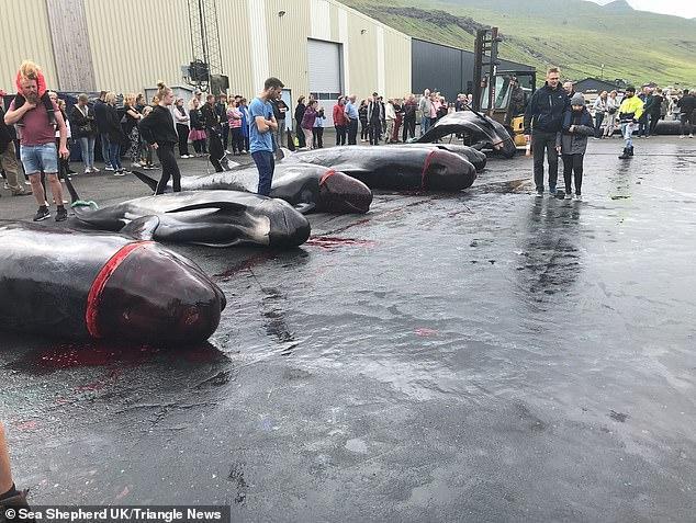 Những con cá voi bị giết nằm dài trên bãi biển, xung quanh là những vị khách du lịch hiếu kỳ.