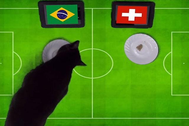 Mèo Cass dự đoán kết quả trận đấu.