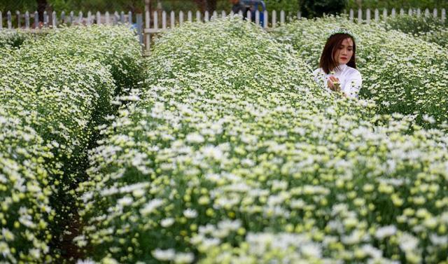 Vườn hoa bao la cho bạn chụp nhiều góc