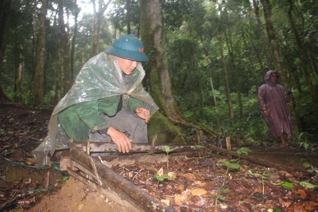 Những cây sâm Ngọc Linh nằm trên độ cao 2.000m