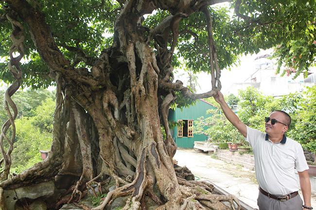 Cây có một quai ấm – rễ bắt vào cành tạo thành một khối.
