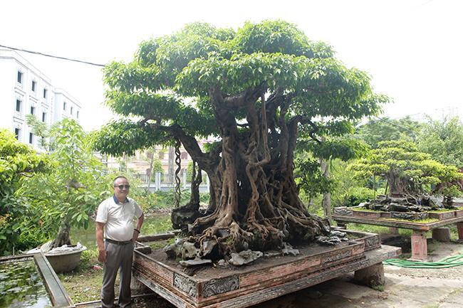 Chủ nhân của tác phẩm cho biết, đây là cây bonsai đại có tuổi đời khoảng 500 năm, chiều cao 2,45m, dài 1,7m, ngang 1,5m. Thân (vách) hoàn toàn tự nhiên thành một khối, đặc biệt bộ rễ lan tỏa xung quanh rất vững trãi.