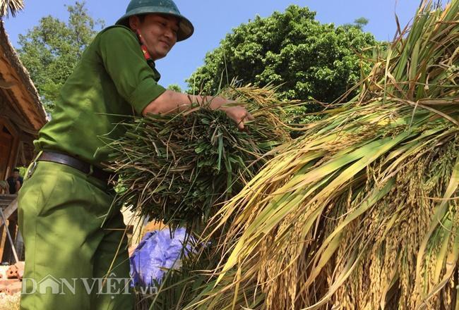 Các chiến sĩ công an giúp người dân tuốt lúa.