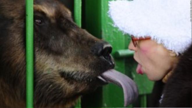 """Huấn luyện viên thú tại công viên """"đọ lưỡi"""" cùng một chú gấu tại Ussuriysk, Nga. Đây là một trong nhiều con thú được cứu sống khỏi sở thú bị ngập lụt đầu năm nay."""