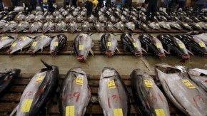 Cá ngừ lớn được bán đấu giá phục vụ các chủ hàng muốn mua con cá đầu tiên trong năm là một trong những truyền thống ở Nhật.