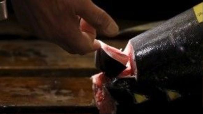 Người bán thường kiểm tra kỹ chất lượng của cá ngừ trước khi đem ra đấu giá. Cá ngừ vây xanh được xem là loại đắt nhất và thường được yêu thích nhất.