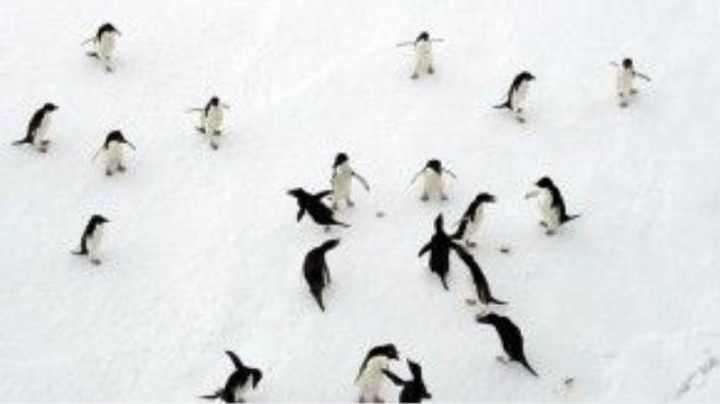 Tới thăm lãnh địa của loài chim cánh cụt Hoàng Đế.