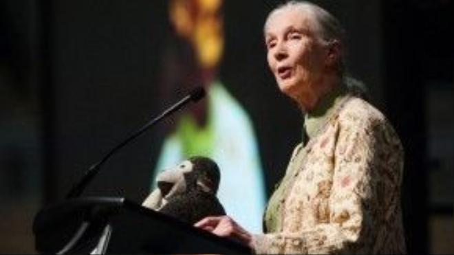 Ngày nay dù đã ở tuổi 81 và không còn làm việc trong rừng nữa, nhưng Jane vẫn tiếp tục làm việc bằng cách di chuyển suốt 300 ngày trong một năm để diễn thuyết nhằm nâng cao nhận thức của con người về môi trường, về tự nhiên và các loài động vật. Bất kể đi tới nước nào, bà cũng mang theo một chú khỉ bông cầm quả chuối để giúp bà nhớ tới Jubilee - người bạn thân thiết khi xưa của bà.