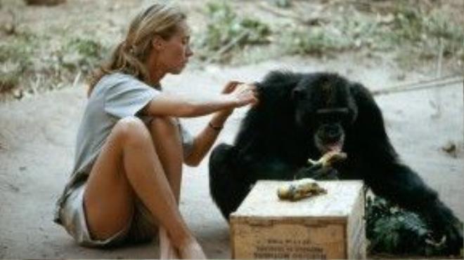 Bà bắt đầu sinh sống luôn trong rừng để quan sát tập tính và tổ chức xã hội của tinh tinh. Dù trước đó bà chưa bao giờ được học hay tập huấn về các kỹ năng nghiên cứu cơ bản, nhưng Jane rất nỗ lực trong việc tự học hỏi, cải thiện kỹ năng cho mình.
