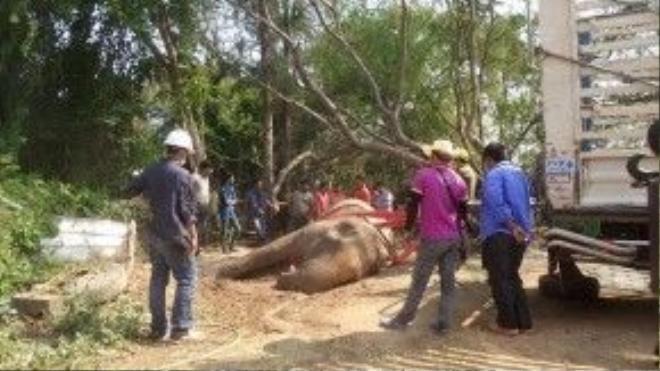 Con voi được đưa tới nơi chôn cất.