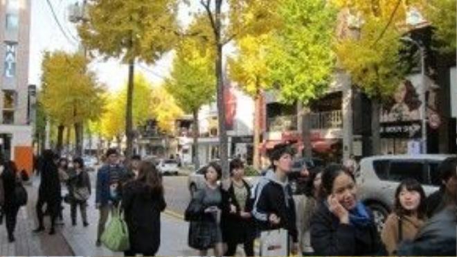 """Garosu-gil là một con đường nổi tiếng thuộc khu Sina-dong, quận Gangnam.Trong tiếng Hàn, """"garosu-gil"""" nghĩa là """"con đường rợp bóng cây"""". Tại đây, khi mùa thu đến những cây bạch quả được trồng hai bên sẽ trổ hoa rực rỡ, khiến cả con đường được nhuộm trong sắc vàng tươi, đẹp tuyệt vời.Ảnh: Parksihoo4u"""
