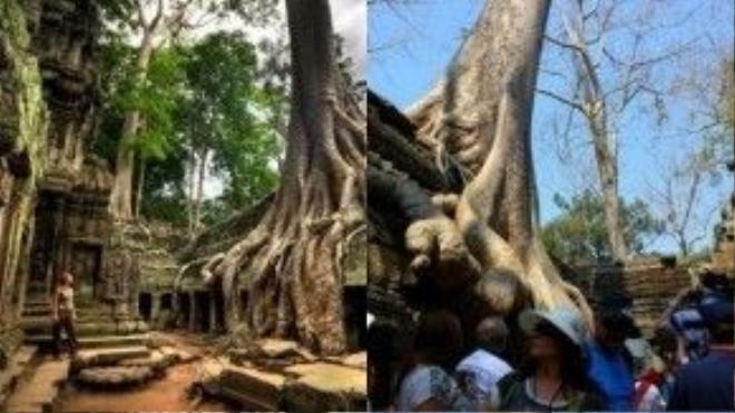 Siem Riep, Campuchia: Vẻ cổ kính của những ngôi chùa cổ tại Siem Reap phải nhường chỗ cho những đám đông khách du lịch.