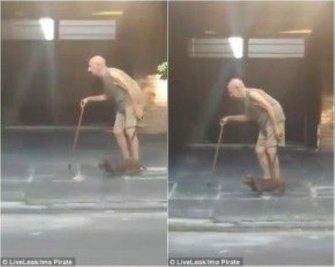 Chú chó vẫn kiên trì đi theo chủ nhân từng bước và còn đợi ông