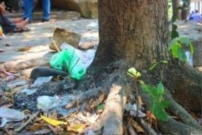 Rác thải bám gốc cây.