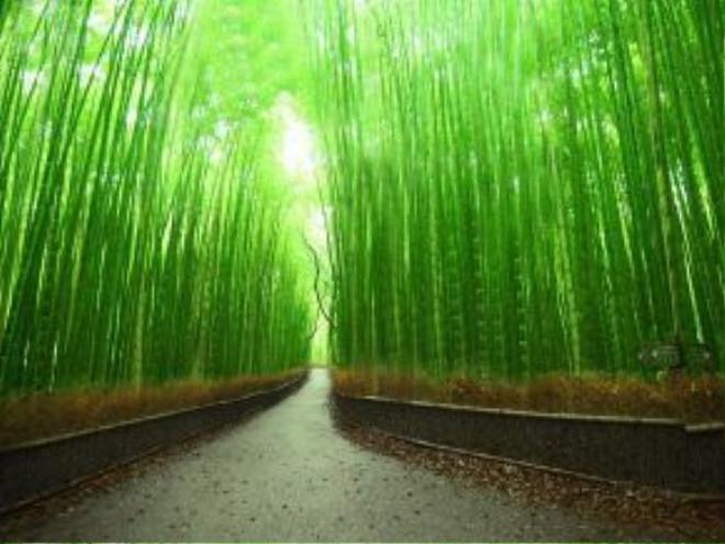 Arashiyama, Kyoto, Nhật Bản: Khu rừng xanh mướt đẹp như cổ tích này đem lại cho du khách cảm giác bình yên, tĩnh lặng.