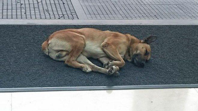 Lòng thương trỗi dậy với chú chó đi hoang Rubio đã bắt đầu một hành trình chờ đợi.
