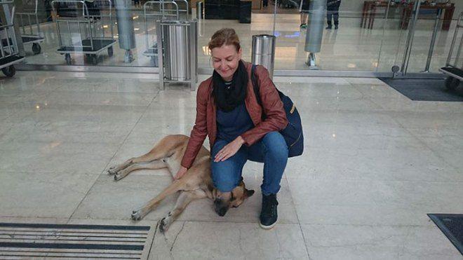 Cô đã cố gắng tách khỏi chú chó bằng nhiều cách nhưng chú chó vẫn kiên trì chờ đợi.