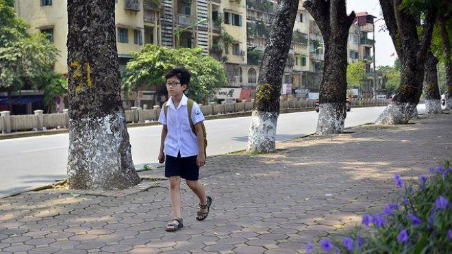 Tuyến đường rợp bóng mát cây xanh đã gắn bó với rất nhiều thế hệ học sinh trường tiểu học Ngọc Khánh hàng ngày đi bộ qua.