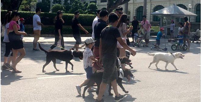 Đàn chó dữ diễu hành ngoài đường.