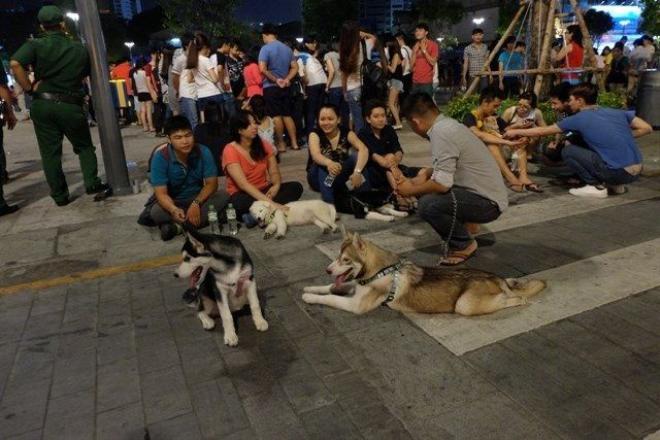 Những chú chó tuy thường ngày rất hiền lành nhưng vẫn có thể gây nguy hiểm với người lạ .