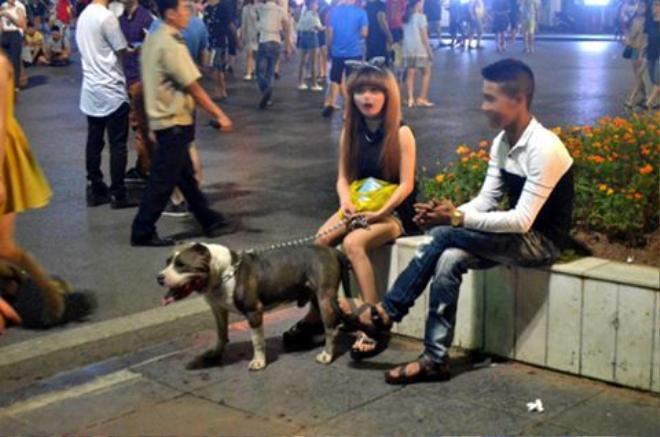 Rất nhiều chú chó hung dữ được chủ nhân dắt đi dạo trên phố đi bộ.