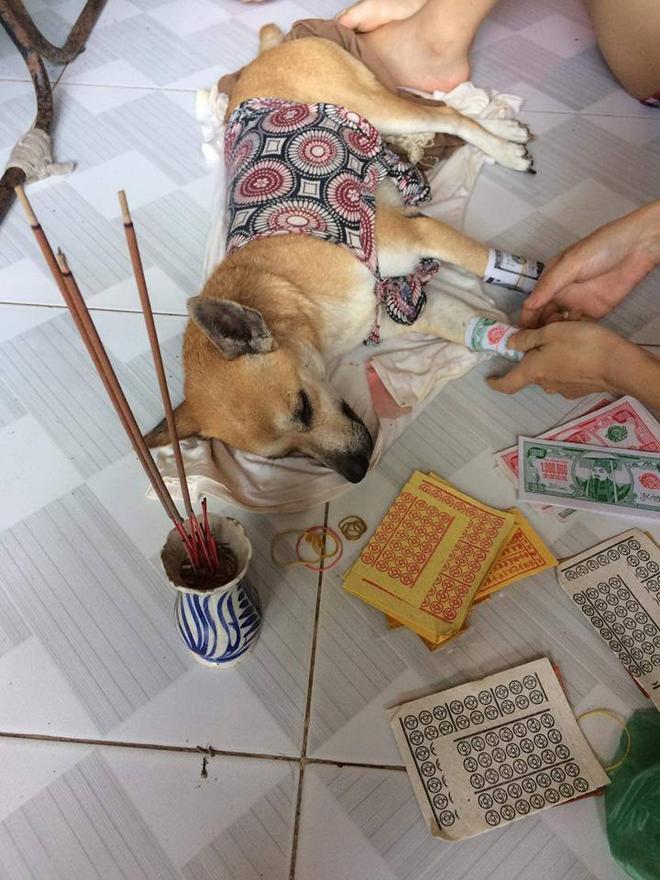 Người chủ này còn thắp hương cho chú chó cưng đã mất.