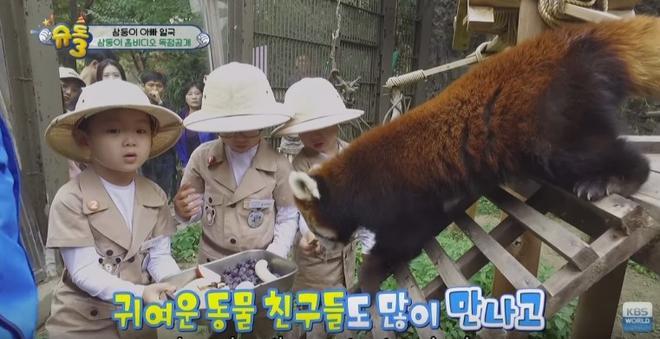 Các em còn được bố Song cho đi vườn thú.