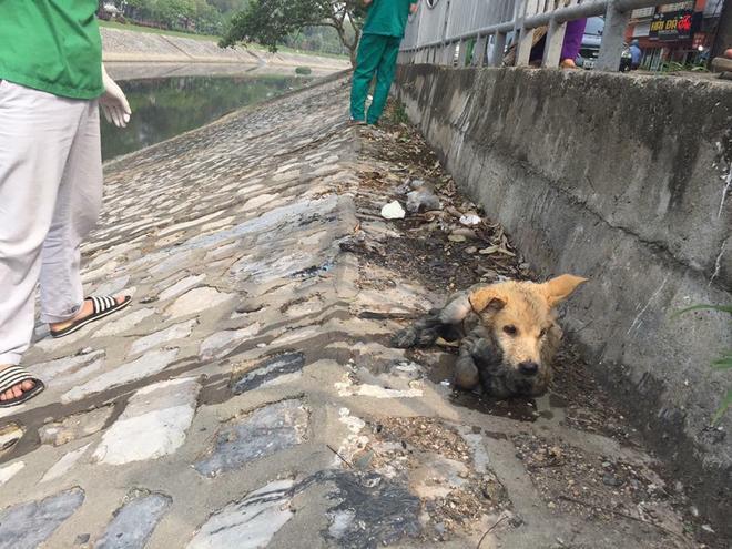 Chú chó bẩn bê bết và run lẩy bẩy sau khi được các thành viên trạm cứu hộ mang lên bờ.