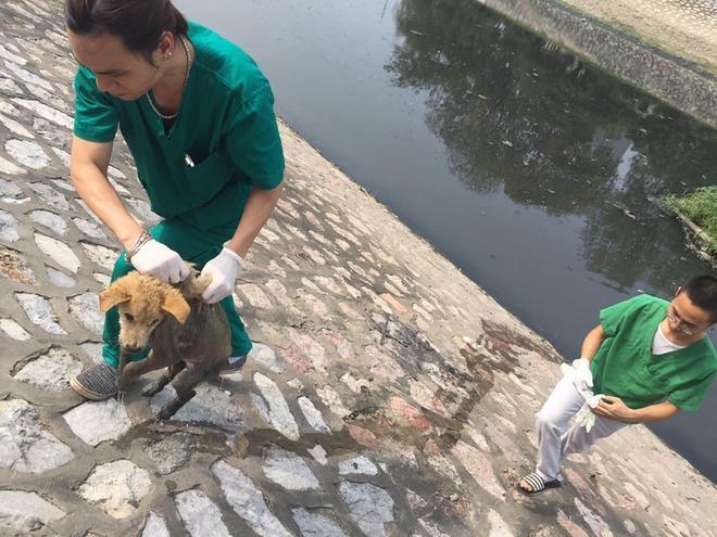Câu chuyện chú chó bị vứt xuống sông vì bệnh tật khiến nhiều người phẫn nộ và thương xót.