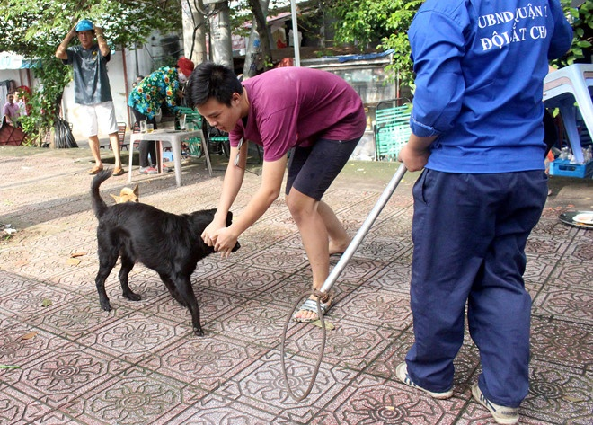 Người dân lùa chó vào nhà khi thấy đội bắt chó. Ảnh: Lê Trai.
