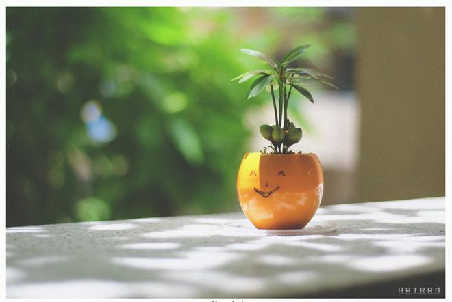 Từng chậu cây nhỏ cũng được trang trí đầy dễ thương, trông là muốn yêu ngay