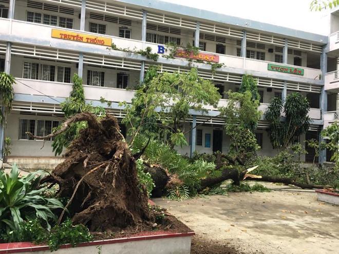 Vì sự cố cây đổ nên học sinhTHPT Hoàng Hoa Thám cũng được nghỉ học vào ngày 27/11.