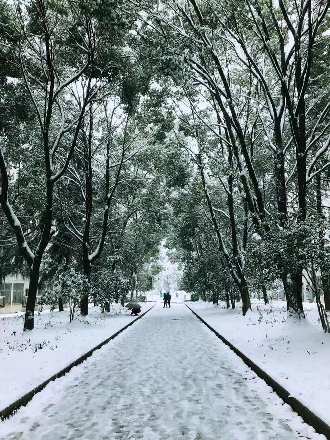"""Đại học Kỹ thuật Hoa Trung hoá """"Bản tình ca mùa đông"""" dưới trời tuyết. Ảnh: toquoc.vn"""