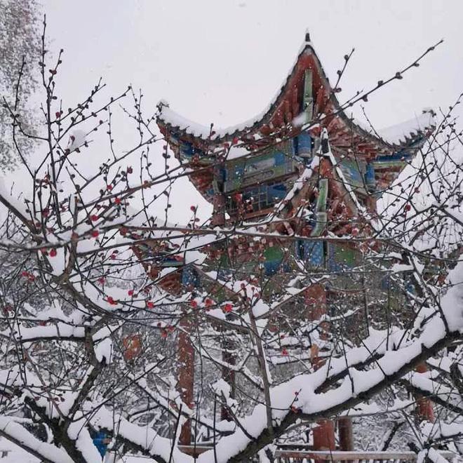 Cành đào điểm màu giữa trời tuyết trắng. Ảnh: toquoc.vn