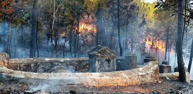 Khu vực rừng cháy có nhiều mồ mã. Ảnh: báo Thanh Niên