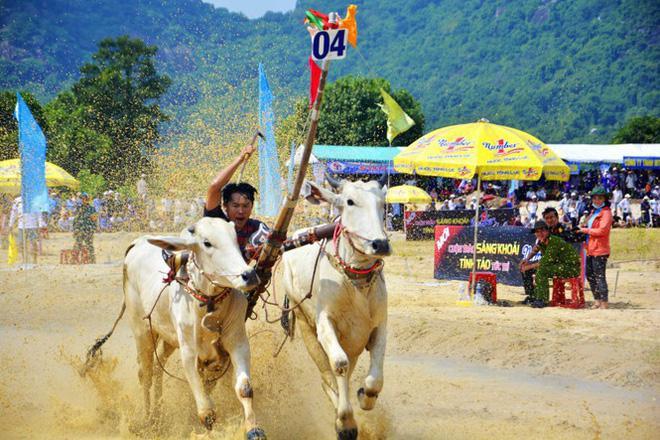 """Vào vòng """"thả"""", người điều khiển liên tục thúc đôi bò tăng tốc về đích."""
