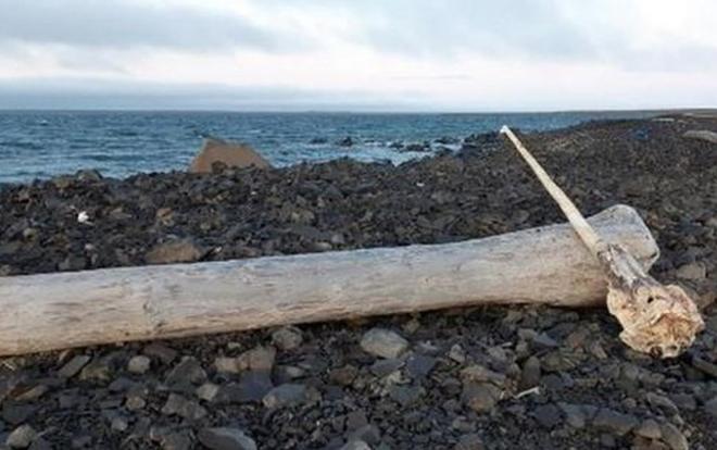 Sừng kỳ lân dạt vào bờ biển.