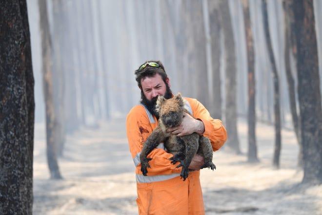 1,25 tỷ động vật chết do cháy rừng nghiêm trọng ở Australia thời gian qua.